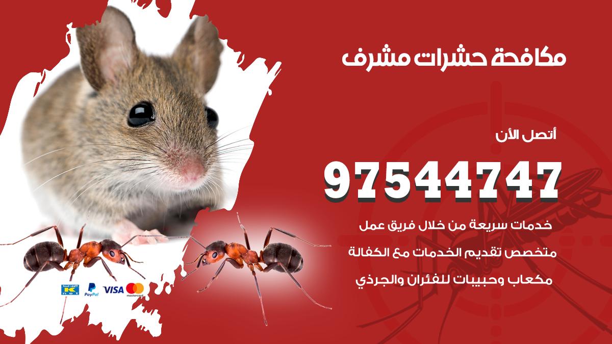 مكافحة حشرات وقوارض مشرف